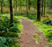 Malcolm Knapp Reserch Forest trail simplified by Michael Garson