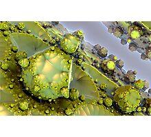 Cactus juice Photographic Print