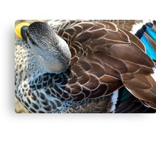 Close-up of Female Mallard Duck Showing Back and Tail Feather Details Canvas Print