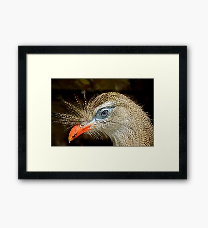 Bright Blue Eyed Red-legged Seriema Bird Framed Print