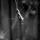 Spider Wrapped within a Leaf by Charlotte Pridding