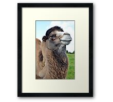 Comical Smiling Bactrian Camel Face Framed Print
