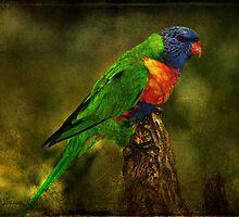 Rainbow Lorikeet by Barb Leopold