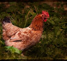 A Good Chook by Barb Leopold