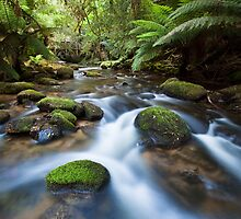 Rapids near St Columba Falls by Will Hore-Lacy