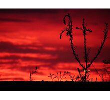 Apricot Sunset Photographic Print