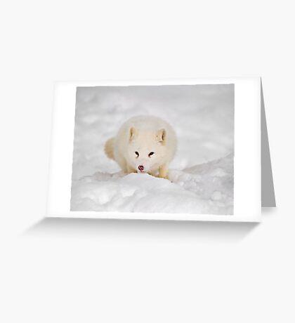 Arctic Fox Greeting Card