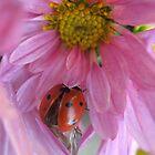 Little ladybug by Ana Belaj