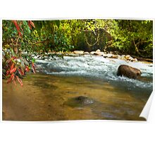 Magical Marquette (Creek, Tully Nth Qld) Poster