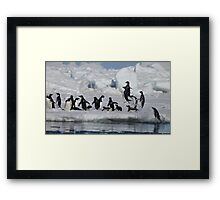 Adelie jumping out of the water Framed Print