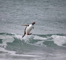 Surfing in gentoo's style by Marion Joncheres