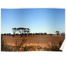 Wheatbelt colours in Summer Poster