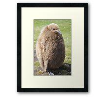 King penguin chick Framed Print