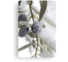 Snow Olives Canvas Print