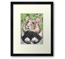 Did Someone Say Nuts Framed Print