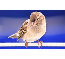 Greek Bird 2 Photographic Print