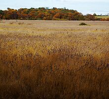 Dunwich Reed Beds by Guy Carpenter