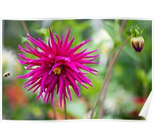 Flowered Poster