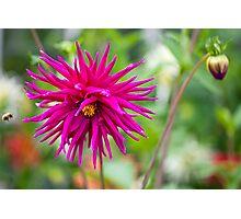 Flowered Photographic Print