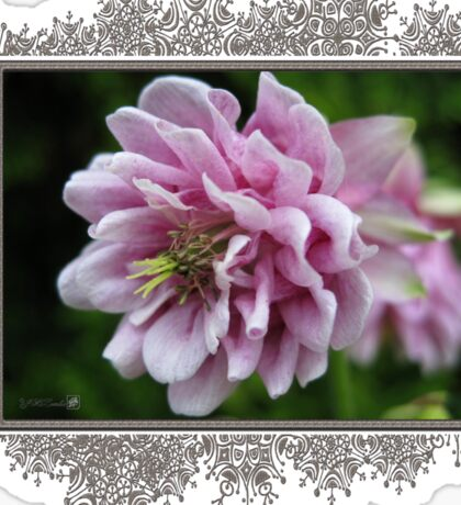 Double Columbine named Pink Tower Sticker
