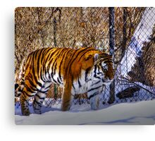 Tiger, Tiger in your tank? Canvas Print