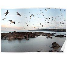 ballybunion seabirds Poster
