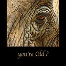 you're old ? by notecards