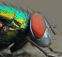 Greenbottle Fly by Jack Hood