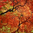 """Japanese Maples, George Eastman House"" by Lisa Cook"