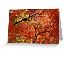"""Japanese Maples, George Eastman House"" Greeting Card"