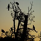 The Birds by poinsiana