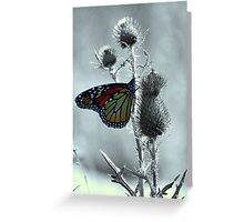 Monarch Park Greeting Card