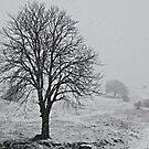 Wind and Snow-Monterosi, Italy by Deborah Downes