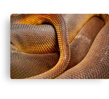 Texture Detail of Coiled Snake Skin Scales Pattern Canvas Print