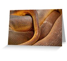 Texture Detail of Coiled Snake Skin Scales Pattern Greeting Card