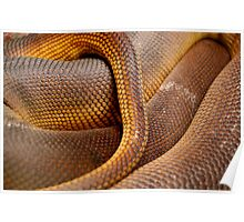 Texture Detail of Coiled Snake Skin Scales Pattern Poster