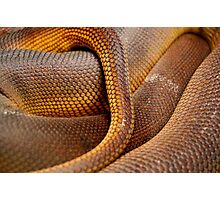 Texture Detail of Coiled Snake Skin Scales Pattern Photographic Print