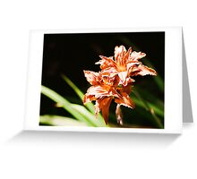 Daylilies in Summer Sunshine Greeting Card
