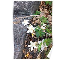 Flowers of Comfort - Maui, Hawaii, United States  Poster