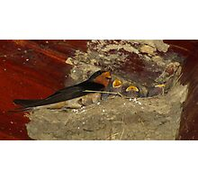 Family Sing Along!  (Barn Swallows) Photographic Print