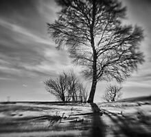 Birch 477 by Michal Tokarczuk