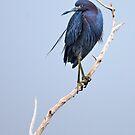 Deep Blue by Kathy Cline