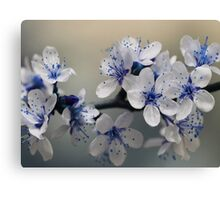 Blue Blossom Canvas Print