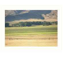 Alfalfa Field in Montana Art Print