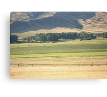 Alfalfa Field in Montana Canvas Print