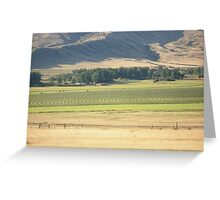 Alfalfa Field in Montana Greeting Card