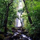 Manoa Valley Falls  by kevin smith  skystudiohawaii