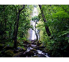 Manoa Valley Falls  Photographic Print