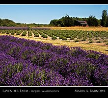 Lavender Farm - - Posters & More by Maria A. Barnowl