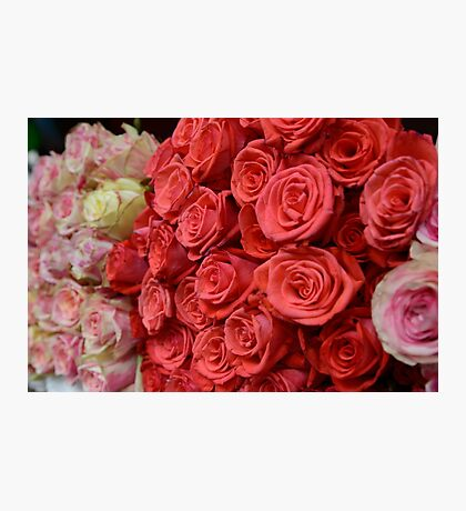 Bouquet of roses. Photographic Print